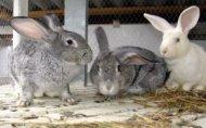 Бизнес план кролиководство