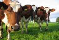 Бизнес план животноводческого комплекса