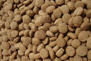 Полнорационное питание для котят в магазине «Зоошеф»